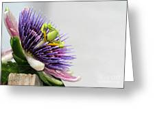 Spikey Passion Flower Greeting Card by Sabrina L Ryan