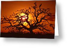 Spooky Tree Greeting Card by Stephen Anderson