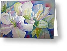 Spring Beauty Greeting Card by Sandy Collier