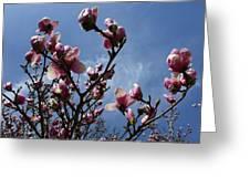 Spring Blooms 2010 Greeting Card by Anna Villarreal Garbis