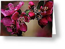 Spring Greeting Card by Charles Muhle
