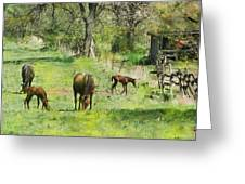 Spring Colts Greeting Card by John Robert Beck