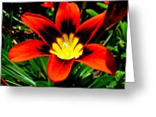 Spring Flower Greeting Card by Joyce Woodhouse