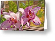 Spring Orchids Photograph Greeting Card by Don  Wright