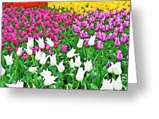 Spring Tulips Flower Field II Greeting Card by Artecco Fine Art Photography