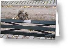 Squirl Nut Salad Greeting Card by Gregory Davis