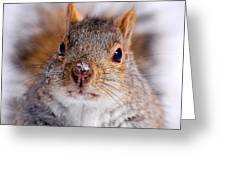 Squirrel Portrait Greeting Card by Mircea Costina Photography