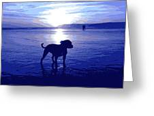 Staffordshire Bull Terrier on Beach Greeting Card by Michael Tompsett