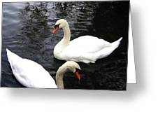 Stanley Park Swans Greeting Card by Will Borden