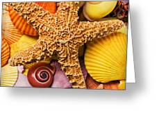 Starfish and seashells  Greeting Card by Garry Gay