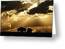 Stately American Bison Greeting Card by George F. Mobley