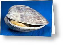 Steamed Clam Greeting Card by Frank Tschakert