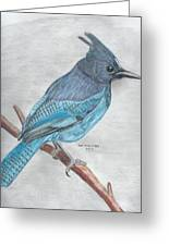 Stellar's Jay Greeting Card by Don  Gallacher