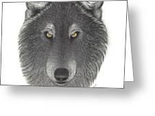 Stepinwolf Greeting Card by Jackie Meyers