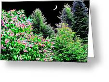 Still Of The Night Greeting Card by Will Borden