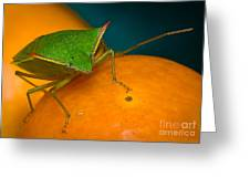 Stink Bug On Kumquats Greeting Card by Warren Sarle