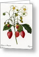 Strawberry Greeting Card by Granger