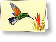 Stripe Tailed Hummingbird Greeting Card by Michael Vigliotti