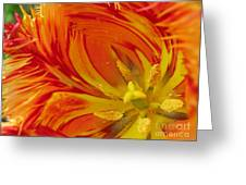 Striped Parrot Tulips. Olympic Flame Greeting Card by Ausra Paulauskaite