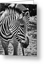Stripes Greeting Card by Saija  Lehtonen