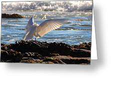 Strut Greeting Card by Clayton Bruster