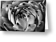 Succulent Petals Black and White Greeting Card by Kelley King