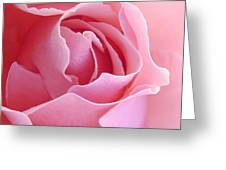 Sugar Of Rose Greeting Card by Jacqueline Migell