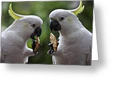Sulphur Crested Cockatoo Pair Greeting Card by Sheila Smart