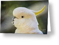 Sulphur Crested Cockatoo Greeting Card by Sheila Smart