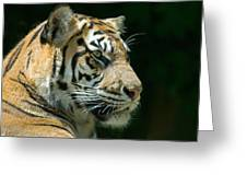 Sumatran Tiger Greeting Card by Mary Lane