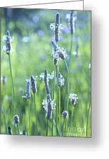 Summer Charm Greeting Card by Aimelle