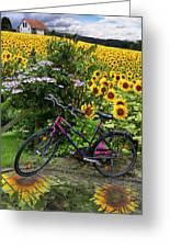Summer Cycling Greeting Card by Debra and Dave Vanderlaan