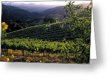 Summer Vineyard Greeting Card by Kathy Yates