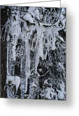 Sumpter Winter Greeting Card by Caprice Scott