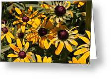 Sun and Shade Greeting Card by Jame Hayes