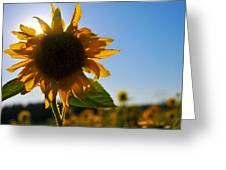 Sun And Sunflower Greeting Card by Brian Bonham
