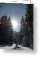 Sun Dogs Greeting Card by Mark Lehar