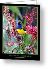 Sunbird Greeting Card by Holly Kempe