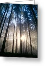 Sunburst In The Forest Greeting Card by Greg Vaughn - Printscapes