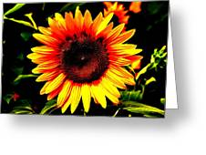 Sunburst Of The Sunflower Greeting Card by Marc Mesa