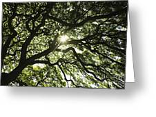 Sunburst Through Tree Greeting Card by Brandon Tabiolo - Printscapes
