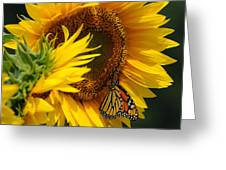 Sunflower And Monarch 3 Greeting Card by Edward Sobuta