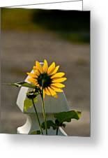 Sunflower Morning Greeting Card by Douglas Barnett