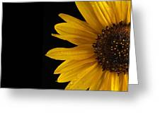 Sunflower Number 3 Greeting Card by Steve Gadomski