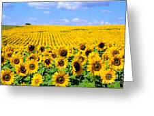 Sunflowers Greeting Card by Bill Bachmann and Photo Researchers