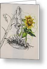 Sunflowers Greeting Card by Wanda Dansereau