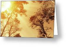 Sunlit Tree Tops Greeting Card by Wim Lanclus