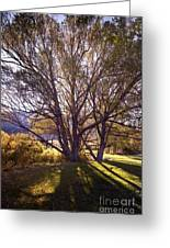 Sunny Mono Tree Greeting Card by Norman  Andrus
