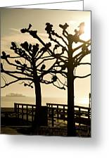 Sunrise Trees Greeting Card by Tom Rickborn