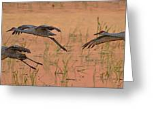 Sunset Landing Greeting Card by Larry Linton